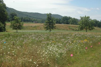 New studies emphasize herbicide effects on wild plants ...