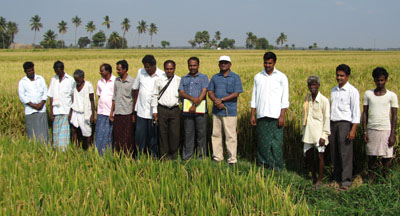 Rice paddy farmers in India