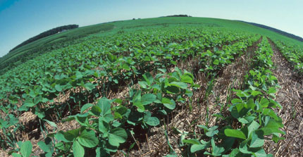 What are the stages of soybean growth?