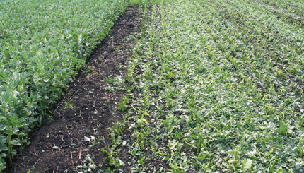 One Crop Two Ways Multiple Benefits Certified Crop Adviser