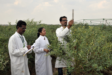 Researchers in pigeonpea field recording data