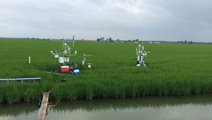 Eddy covariance towers for long term and temporary data in Arkansas rice field