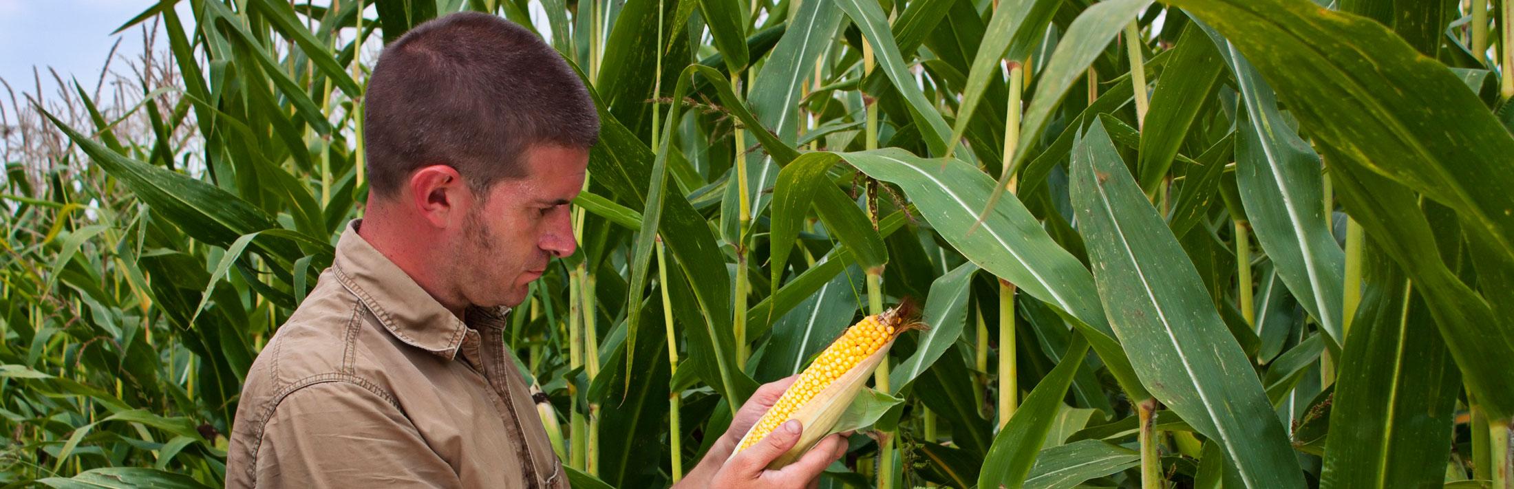 Exam Study Materials | Certified Crop Adviser